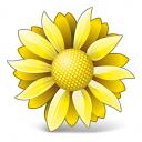 Flower Yellow Icon 128x128