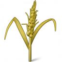 Wheat Icon 128x128