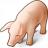 Pig Icon 48x48
