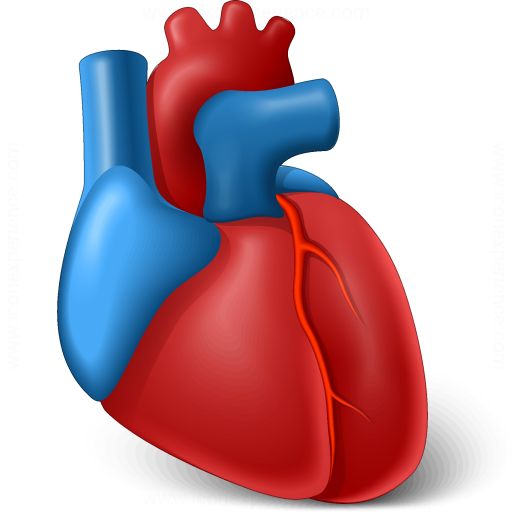 Heart Organ Icon