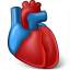 Heart Organ Icon 64x64