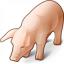 Pig Icon 64x64